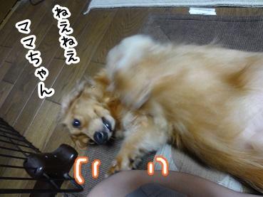 kinako463.jpg