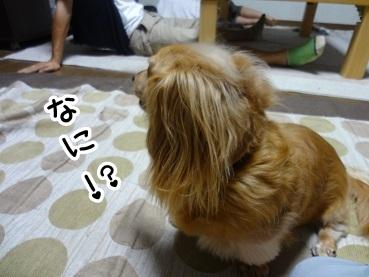 kinako469.jpg