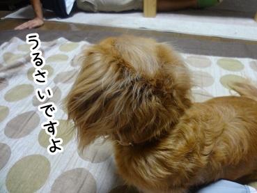 kinako470.jpg