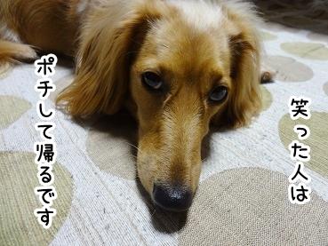 kinako472.jpg