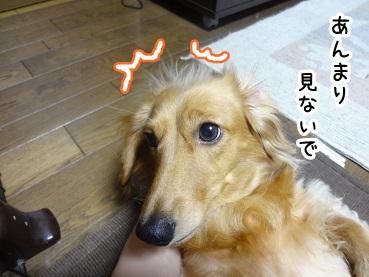 kinako473.jpg