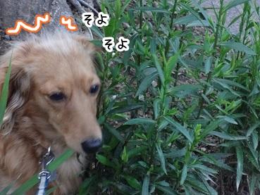 kinako475.jpg