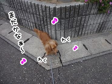 kinako494.jpg