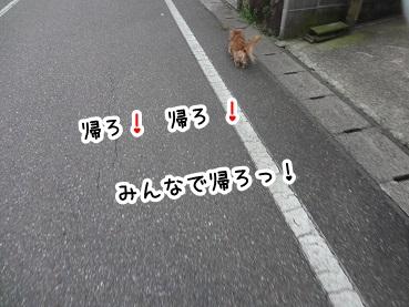 kinako497.jpg
