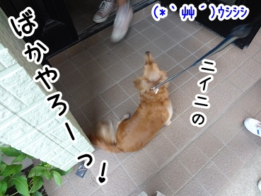 kinako499.jpg