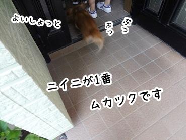 kinako500.jpg
