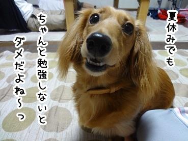 kinako502.jpg