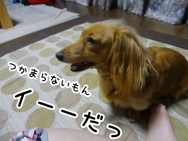 kinako505.jpg
