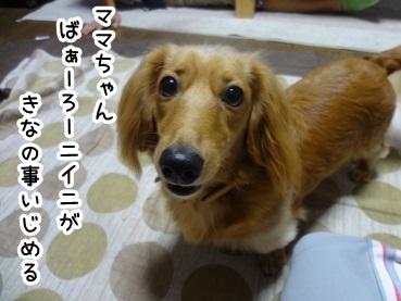 kinako506.jpg