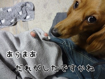 kinako51.jpg