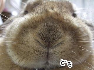 kinako511.jpg