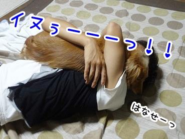 kinako515.jpg