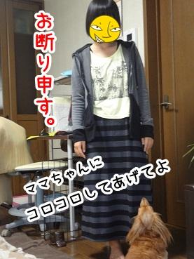 kinako516.jpg