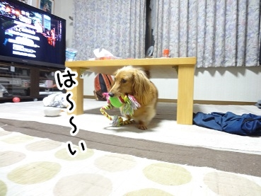 kinako522.jpg