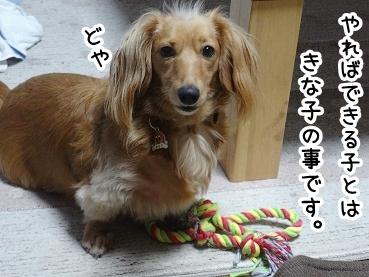 kinako545.jpg