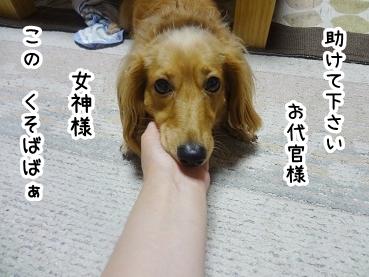 kinako554.jpg