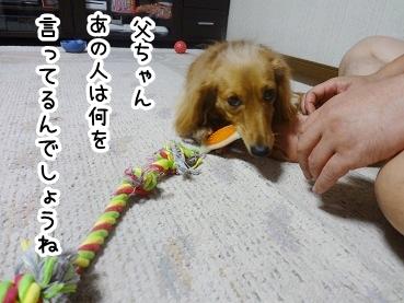 kinako557.jpg