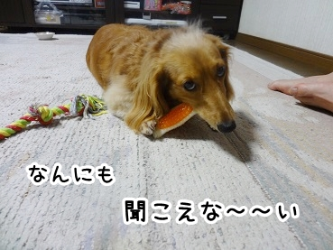 kinako558.jpg