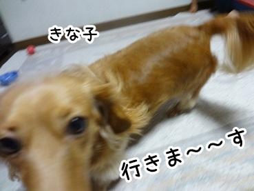 kinako560.jpg