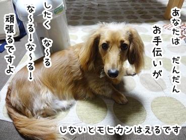 kinako563.jpg