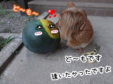 kinako564.jpg
