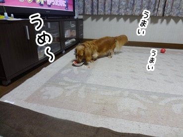 kinako569.jpg