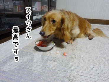 kinako570.jpg