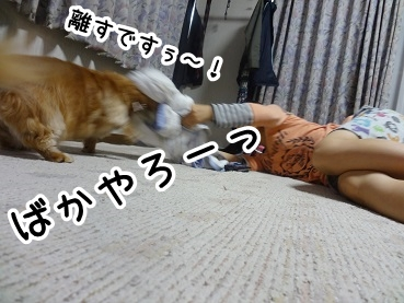 kinako575.jpg