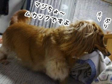 kinako576.jpg