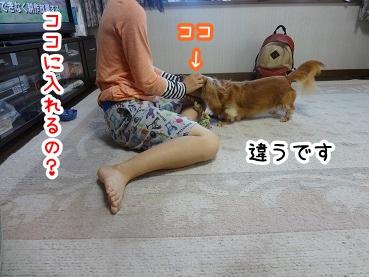 kinako580.jpg