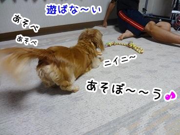 kinako585.jpg