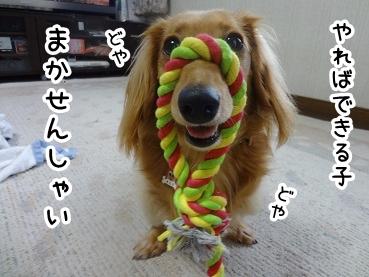 kinako594.jpg