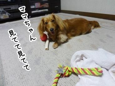 kinako599.jpg