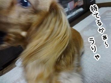 kinako603.jpg