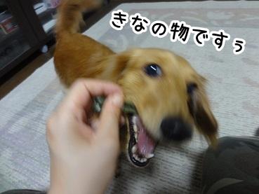 kinako606.jpg