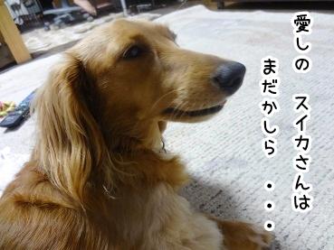 kinako609.jpg