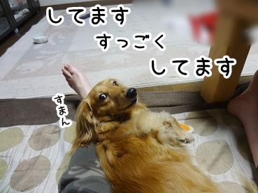 kinako614.jpg