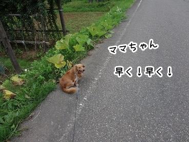kinako634.jpg