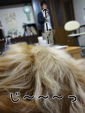 kinako64.jpg