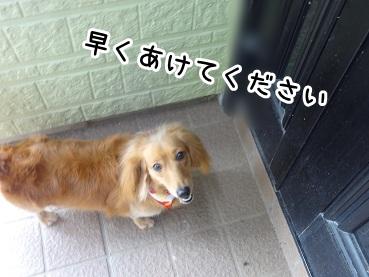 kinako646.jpg