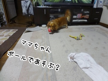 kinako648.jpg