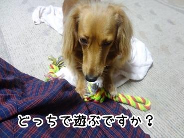 kinako651.jpg