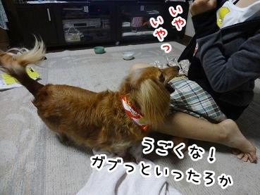 kinako678.jpg