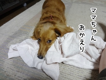 kinako684.jpg