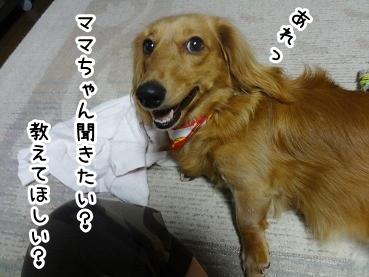 kinako688.jpg