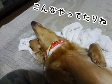 kinako690.jpg