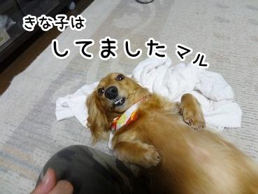 kinako691.jpg