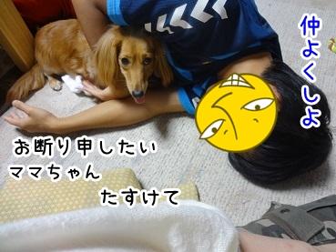kinako701.jpg
