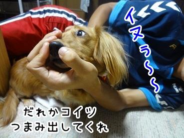 kinako702.jpg