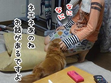 kinako703.jpg